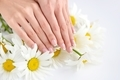 Hands of a woman with beautiful french manicure and white daisy - PhotoDune Item for Sale