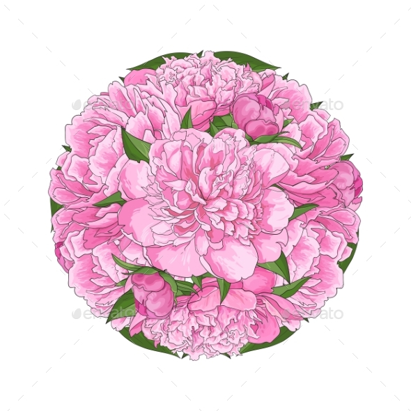 Pink Peony Bouquet in Round Shape Isolated - Flowers & Plants Nature