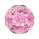 Pink Peony Bouquet in Round Shape Isolated