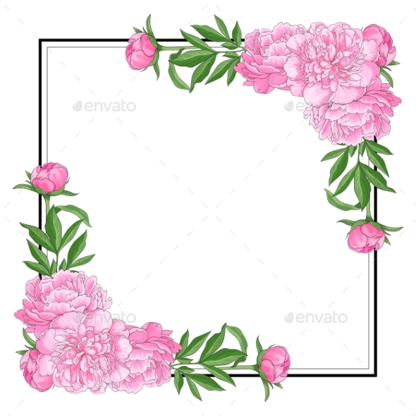 Tender Pink Peonies on Corners of Square Shape - Flowers & Plants Nature
