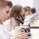 Children at School Looking Into Microscope - VideoHive Item for Sale