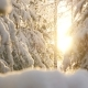Snowy Winter Trees. Snowy Forest on Winter Time, Sun Shines in Wwinter Woods. Sun Shine Through Tree - VideoHive Item for Sale