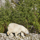 Female polar bear at the zoo. Endangered animals. Horizontal - PhotoDune Item for Sale