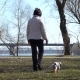 Elderly Woman Walks in Spring Park with Little Dog - VideoHive Item for Sale