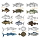 Side View on Isolated Fish Catch Sketches - GraphicRiver Item for Sale