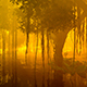 Fog And Water In A Damp Tropical Forest - VideoHive Item for Sale
