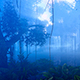 Trees In The Rainforest - VideoHive Item for Sale