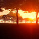 Movement In The Forest At Sunset - VideoHive Item for Sale