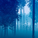 Morning Bamboo Forest - VideoHive Item for Sale