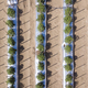 Straight down, aerial view of tomato crop growing in rows. - PhotoDune Item for Sale