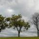 three trees, one is dead - PhotoDune Item for Sale