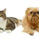 Grey cat and dog lie together - PhotoDune Item for Sale