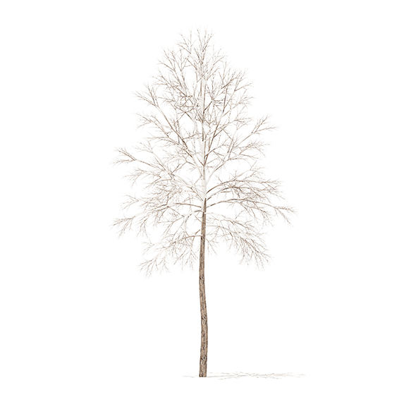 River Birch with Snow 3D Model 3.2m - 3DOcean Item for Sale