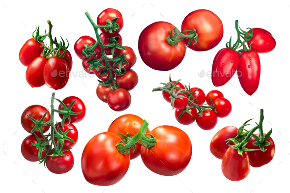 Tomatoes on the vine, clusters, paths - Stock Photo - Images