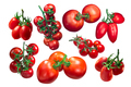 Tomatoes on the vine, clusters, paths - PhotoDune Item for Sale