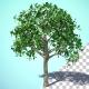 Growing Orange Tree - VideoHive Item for Sale