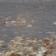 oave Rolls over the Shore with Seashells - VideoHive Item for Sale