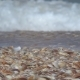 Wave Rolls over the Shore with Seashells - VideoHive Item for Sale
