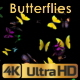Butterflies Arrived - VideoHive Item for Sale