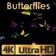 Butterflies Fly Away - VideoHive Item for Sale