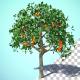 Growing Orange Tree Fruit - VideoHive Item for Sale