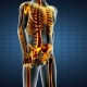 Human Bones Radiographic Scan - VideoHive Item for Sale