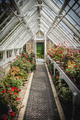 Old Fashioned Greenhouse Filled With Flowers - PhotoDune Item for Sale