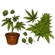 Set of Cannabis Objects