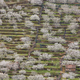 Cherry blossom in Jerte Valley hills, Caceres. Spring Spain. Seasonal - PhotoDune Item for Sale