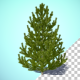 Growing Pine Tree - VideoHive Item for Sale