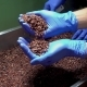Quality Control of Cocoa Nibs - VideoHive Item for Sale