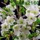 Sunny Spring Morning in Cherry Garden - VideoHive Item for Sale