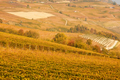Vineyards and hills in autumn with yellow and brown leaves - PhotoDune Item for Sale