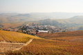 Barolo town and vineyards in autumn with yellow and brown leaves in Italy - PhotoDune Item for Sale