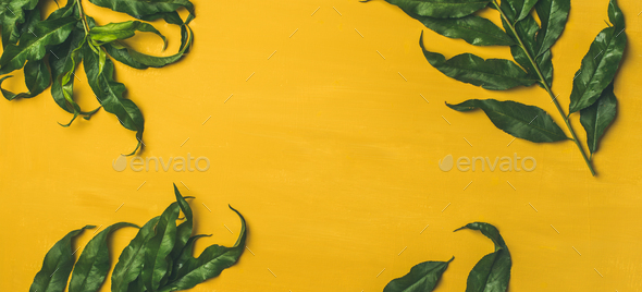 Tropical Tree Green Leaves Over Bright Yellow Background Stock Photo Images