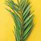 Green palm branch over bright yellow background, narrow composition - PhotoDune Item for Sale