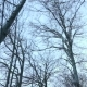 Trees in Forest at Winter - VideoHive Item for Sale