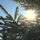 Sun Shine Through Tree Branches Covered with Snow - VideoHive Item for Sale
