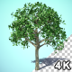 Growing Orange Tree HQ - VideoHive Item for Sale