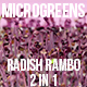 Microgreens Radish Rambo - VideoHive Item for Sale
