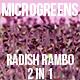 Microgreens Radish Rambo - VideoHive Item for Sale