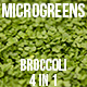 Microgreens Broccoli - VideoHive Item for Sale