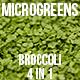 Microgreens Broccoli - VideoHive Item for Sale