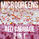 Microgreens Red Cabbage - VideoHive Item for Sale