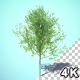 Growing Tree HQ - VideoHive Item for Sale