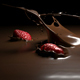 Strawberries Falling into Melted Chocolate - VideoHive Item for Sale