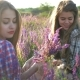 Girls Sitting on the Field with Lilac Flowers - VideoHive Item for Sale