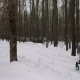 Mother Is Walking with a Stroller in the Winter - VideoHive Item for Sale