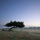 lone pine tree on meadow in dusk - PhotoDune Item for Sale
