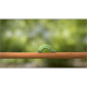 Green Caterpillar - VideoHive Item for Sale